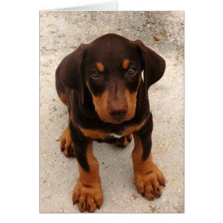 Cartão Filhote de cachorro do Doberman