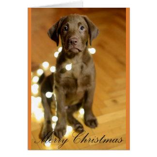 Cartão Filhote de cachorro do Feliz Natal nas luzes