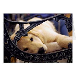 Cartão Filhote de cachorro do golden retriever