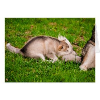 Cartão Filhote de cachorro do Malamute do Alasca