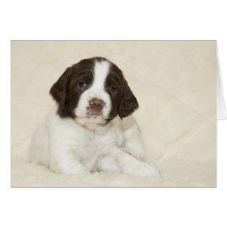 Cartão Filhote de cachorro do Spaniel de Springer