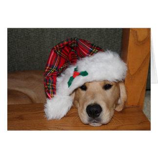 Cartão Filhote de cachorro dourado do Natal no chapéu