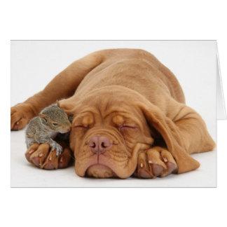Cartão Filhote de cachorro francês do Mastiff com esquilo