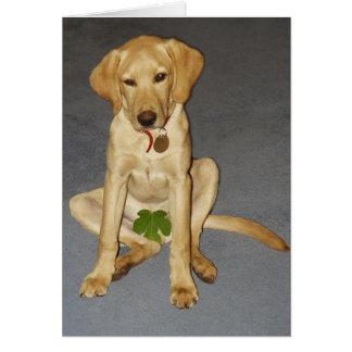 Cartão Filhote de cachorro modesto