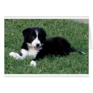 Cartão filhote de cachorro vertical de border collie do