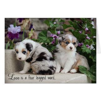 Cartão Filhotes de cachorro 1 de Notecard dos Aussies dos