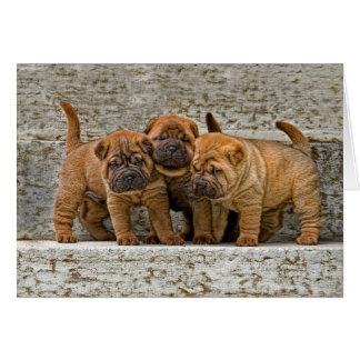 Cartão Filhotes de cachorro 3 de Shar-Pei em seguido