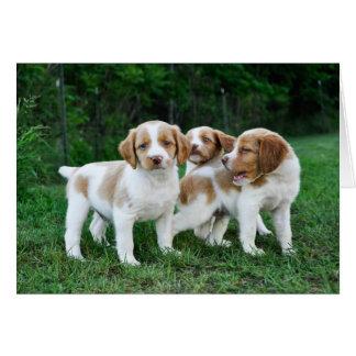 Cartão Filhotes de cachorro de Brittany