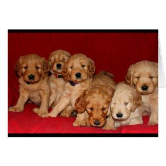 Cartão Filhotes de cachorro de Goldendoodle que pensam de