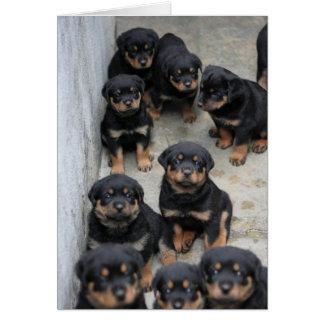 Cartão Filhotes de cachorro de Rottweiler