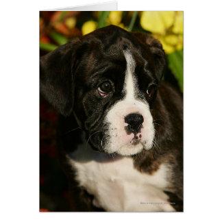 Cartão Filhotes de cachorro do pugilista