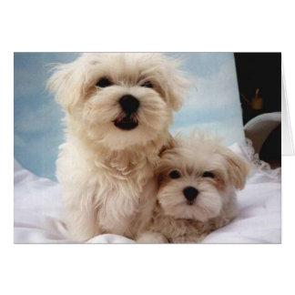 Cartão Filhotes de cachorro malteses