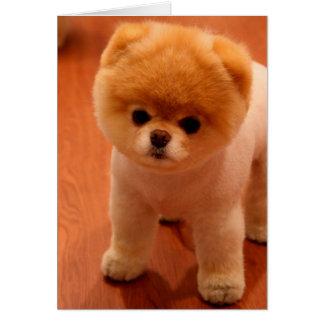 Cartão filhotes de cachorro Pomeranian-bonitos do cão-pom