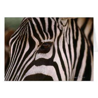 Cartão Fim-acima da cabeça da zebra