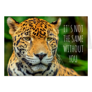 Cartão Fim-acima de uma cara do jaguar, Belize