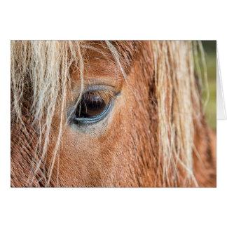 Cartão Fim-acima do olho e da cabeça do cavalo islandês