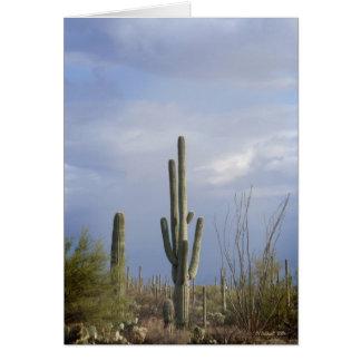 Cartão Fim da tarde no deserto