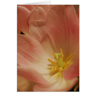 Cartão Fim de Tulips_up