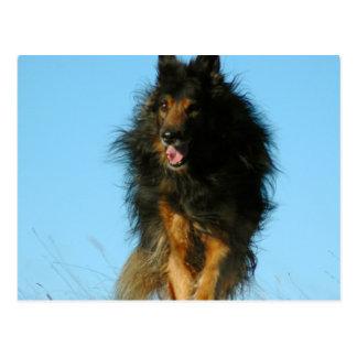 Cartão finlandeses do cão de Lapphund