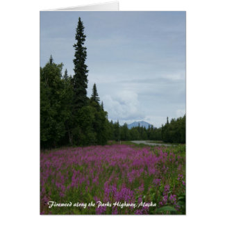 Cartão Fireweed ao longo da estrada dos parques, Alaska
