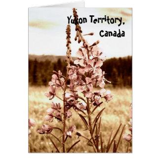 Cartão Fireweed do Sepia; Território yukon, Canadá