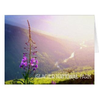 Cartão Fireweed no parque nacional de geleira