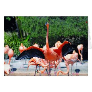 Cartão Flamingo
