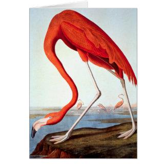 Cartão Flamingo americano