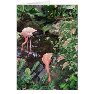 Cartão Flamingos cor-de-rosa
