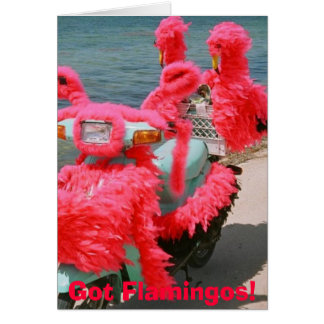 Cartão Flamingos obtidos! ,