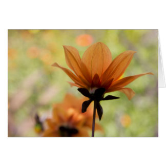 Cartão Flor alaranjada