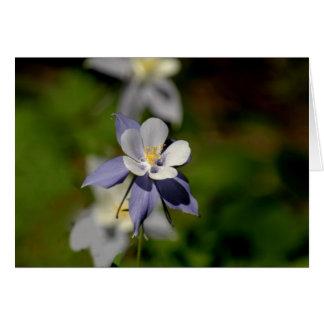 Cartão Flor aquilégia 7