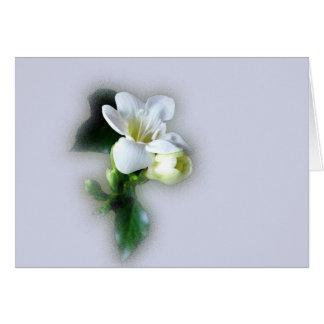 Cartão flor branca do freesia