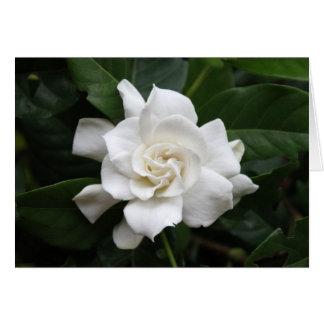Cartão Flor branca do gardenia