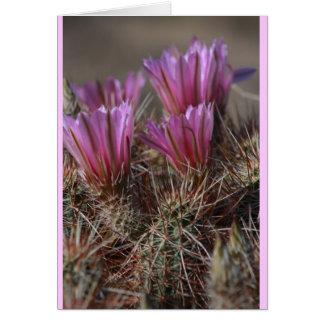 Cartão Flor cor-de-rosa do cacto do deserto