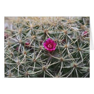 Cartão Flor cor-de-rosa do catus do tambor