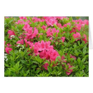 Cartão Flor cor-de-rosa do primavera do rododendro