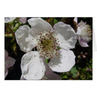 Cartão Flor cor-de-rosa selvagem