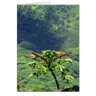 Cartão Flor da árvore de guarda-chuva
