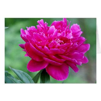 Cartão Flor da peônia