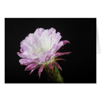 Cartão Flor da princesa Anne Echinopsis Híbrido