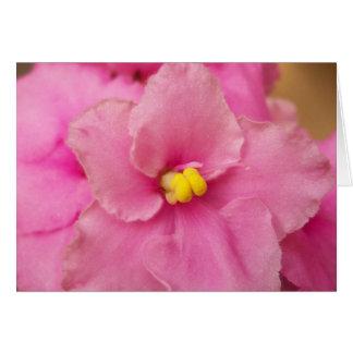 Cartão Flor da violeta africana