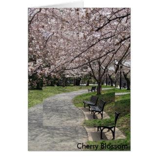 Cartão flor de cerejeira da C.C. de Washington