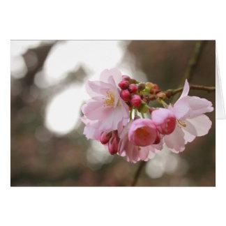 Cartão flor de cerejeira japonesa na luz