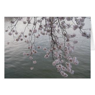 Cartão flor de cerejeira menos a multidão
