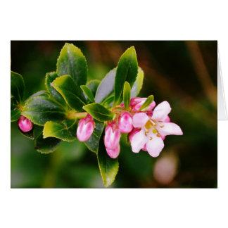 Cartão Flor de cerejeira selvagem