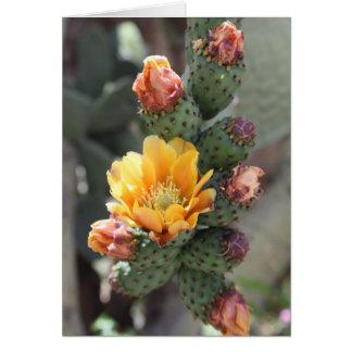Cartão Flor de Cholla