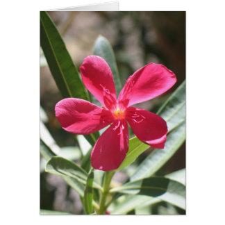 Cartão Flor desconhecida, o Vale da Morte
