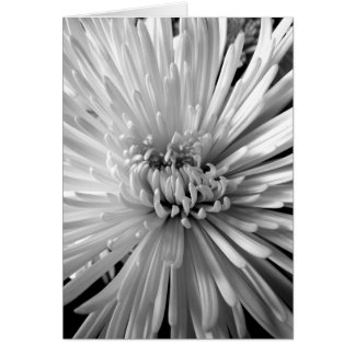 Cartão Flor do crisântemo