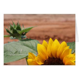 Cartão Flor do girassol